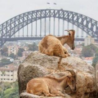 Animal encounters in Sydney