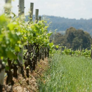 Discover Barossa Valley with a scenic drive in Adelaide