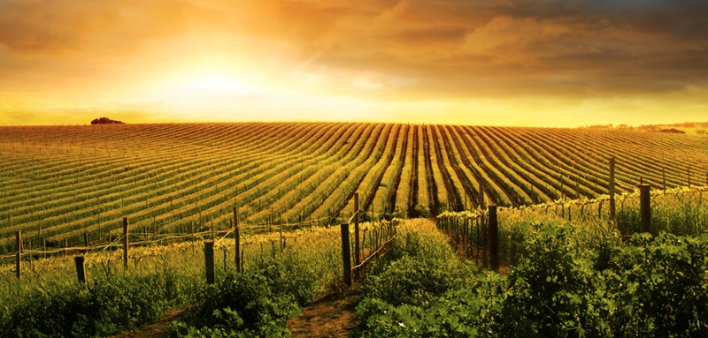 Sunsets over the Barossa Valley vineyards will take your breath away.