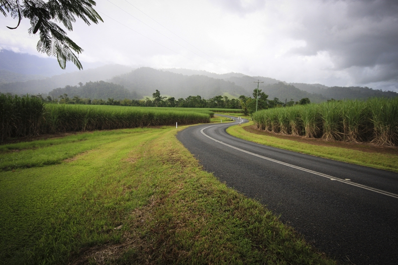 Set out from Cairns on a great day trip into the Wet Tropics.