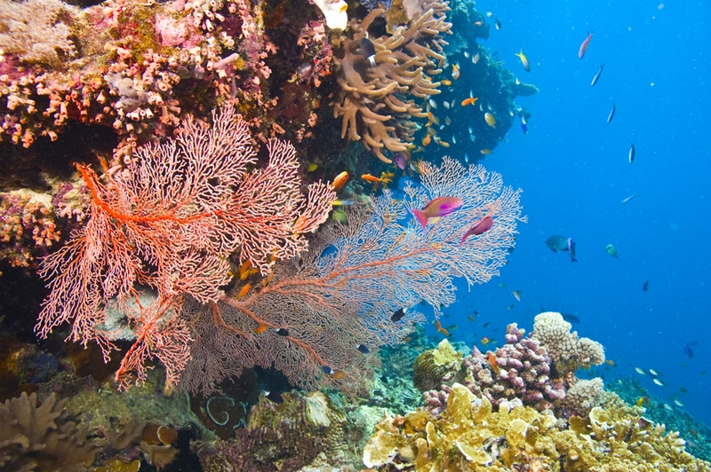 Explore the coral under the sea at the Great Barrier Reef.