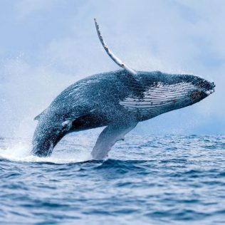 The top 5 places to see whales on Australia's east coast