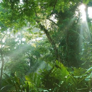 North Queensland: Paradise in the rainforest