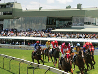 Race Horses Rounding the Bend at the Gold Coast Turf Club
