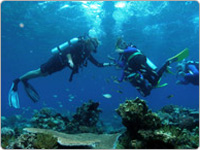 Two Scuba Divers Underwater Facing Each Other on Passions of Paradise Reef Cruise Cairns