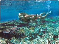 Woman in Black Bikini Snorkelling A Shallow Ornate Coral Reef