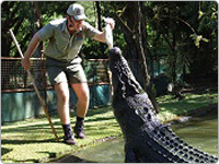 Wildlife Keeper Feeding a Crocodile by Hand at Cairns Tropical Zoo