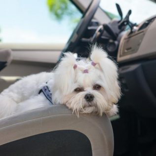 5 reminders for road trips with Rover